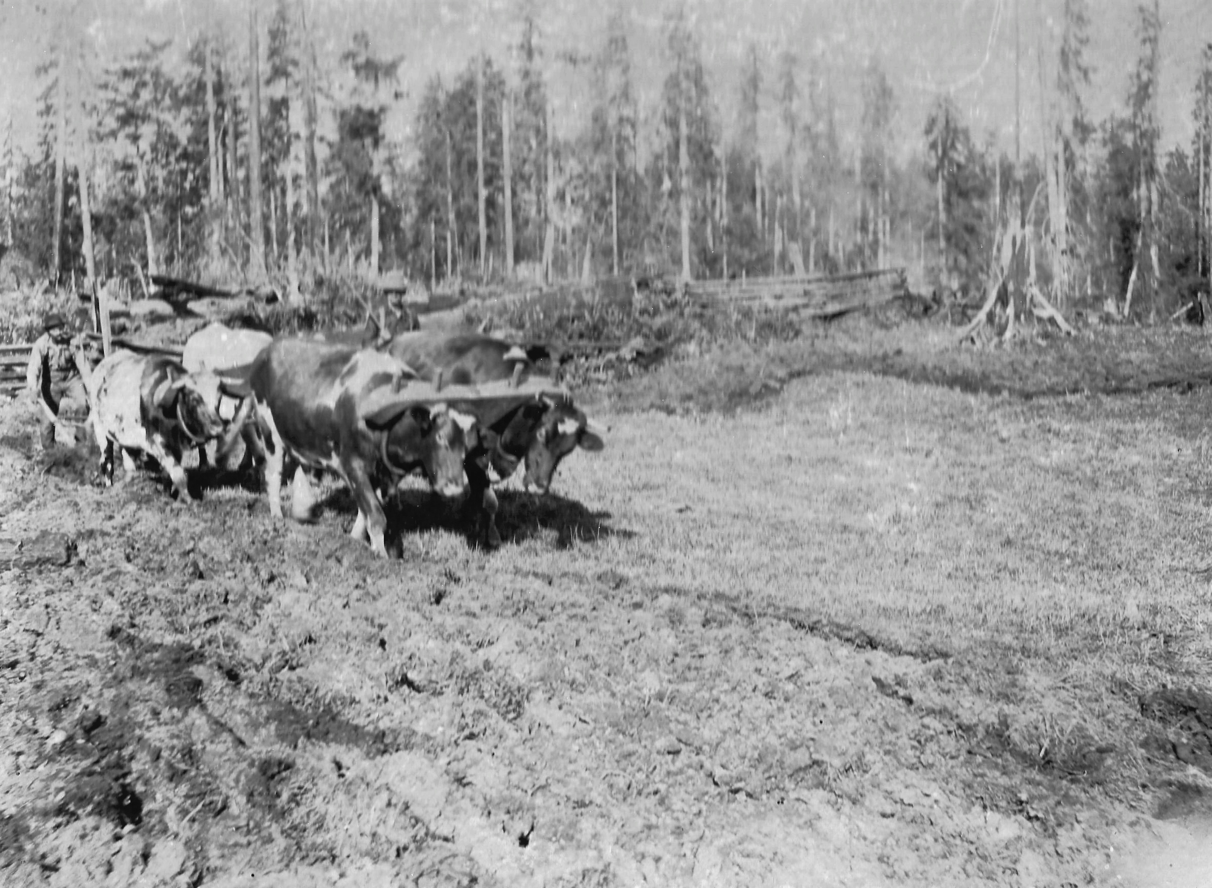 Farming in the Forest
