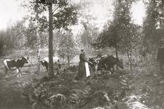 Swedish Farm Lady
