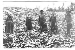Farming Near Cadillac