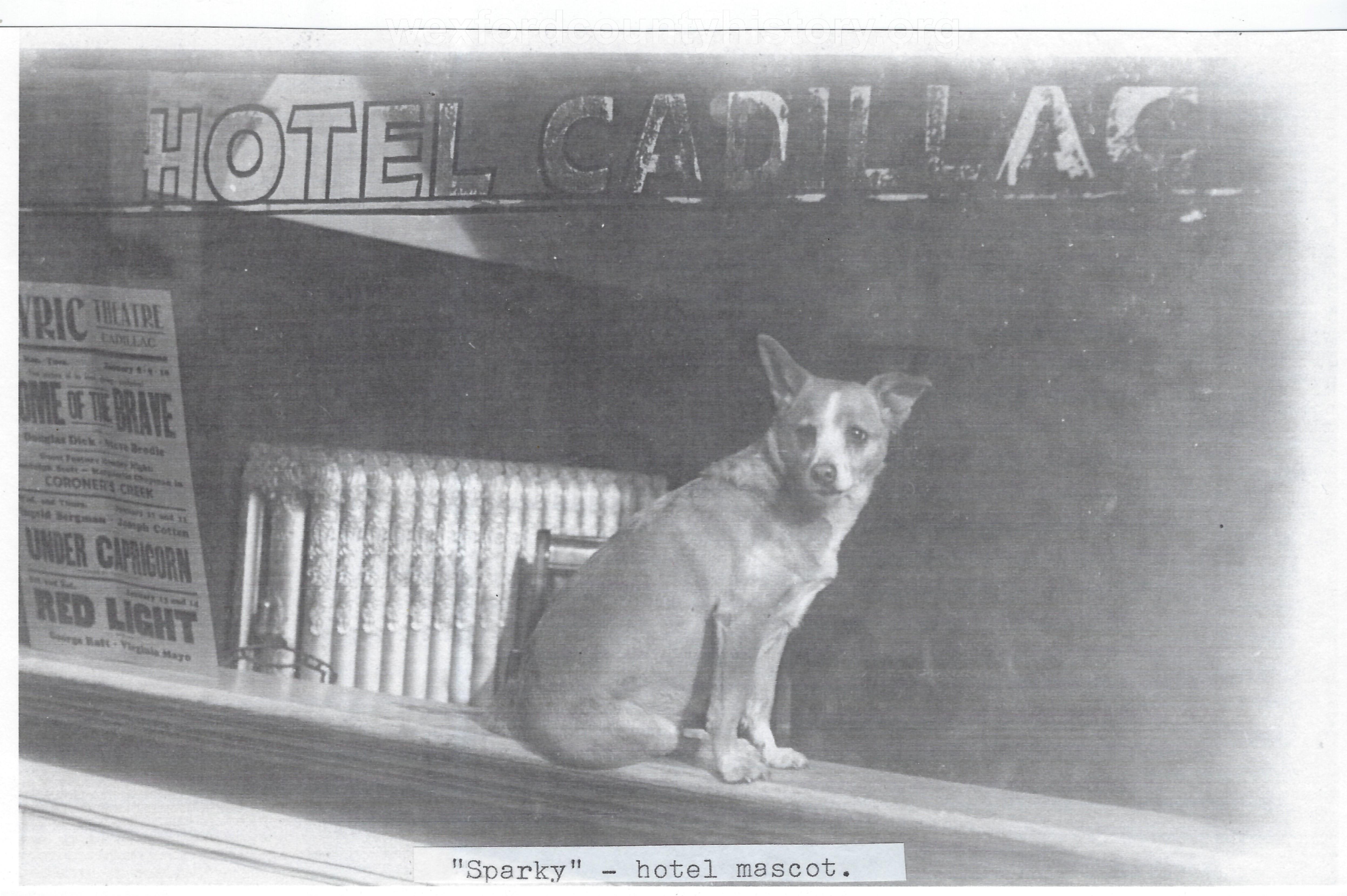Hotel Cadillac Mascot, Sparky The Dog