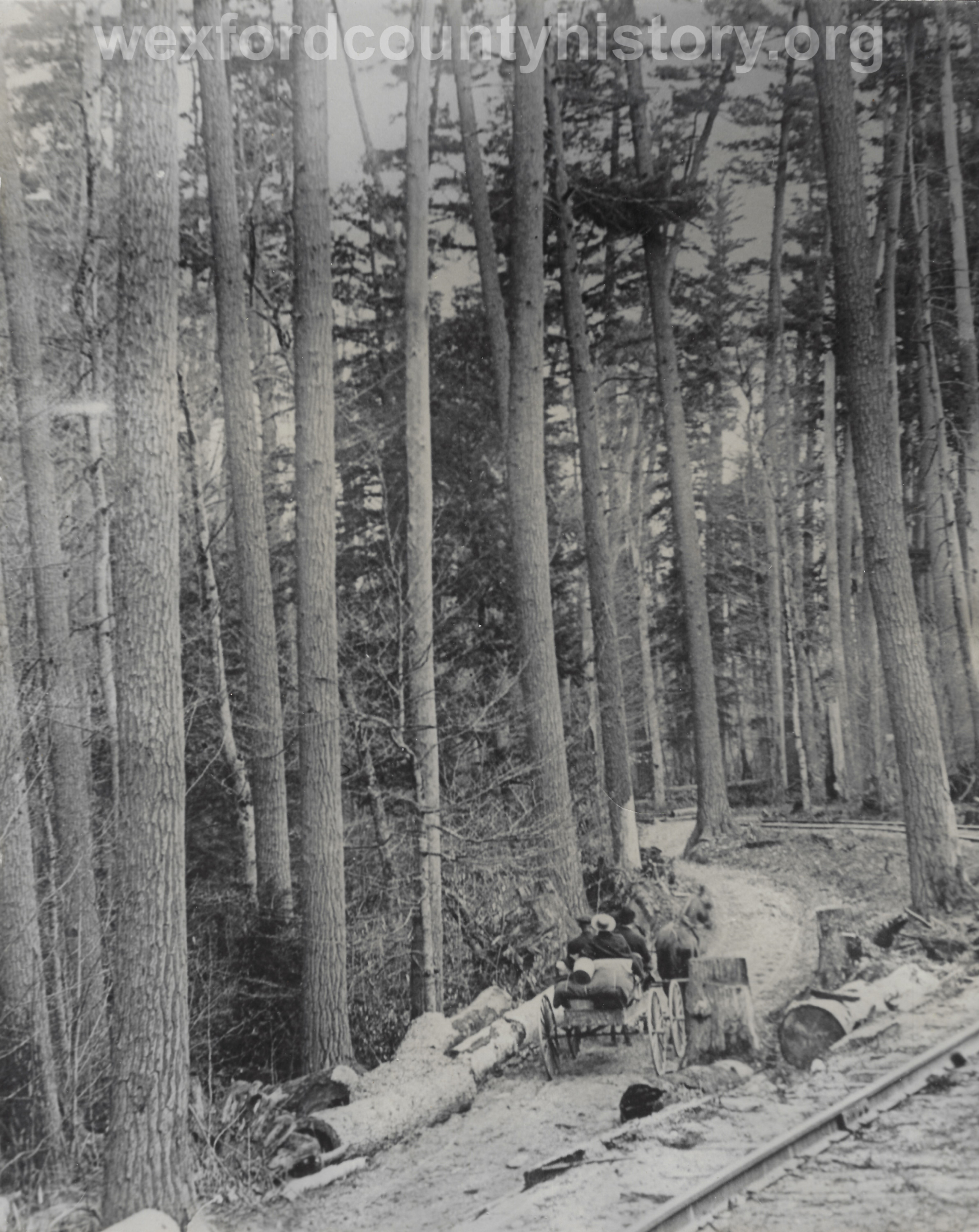Carriage Ride Through The Forest
