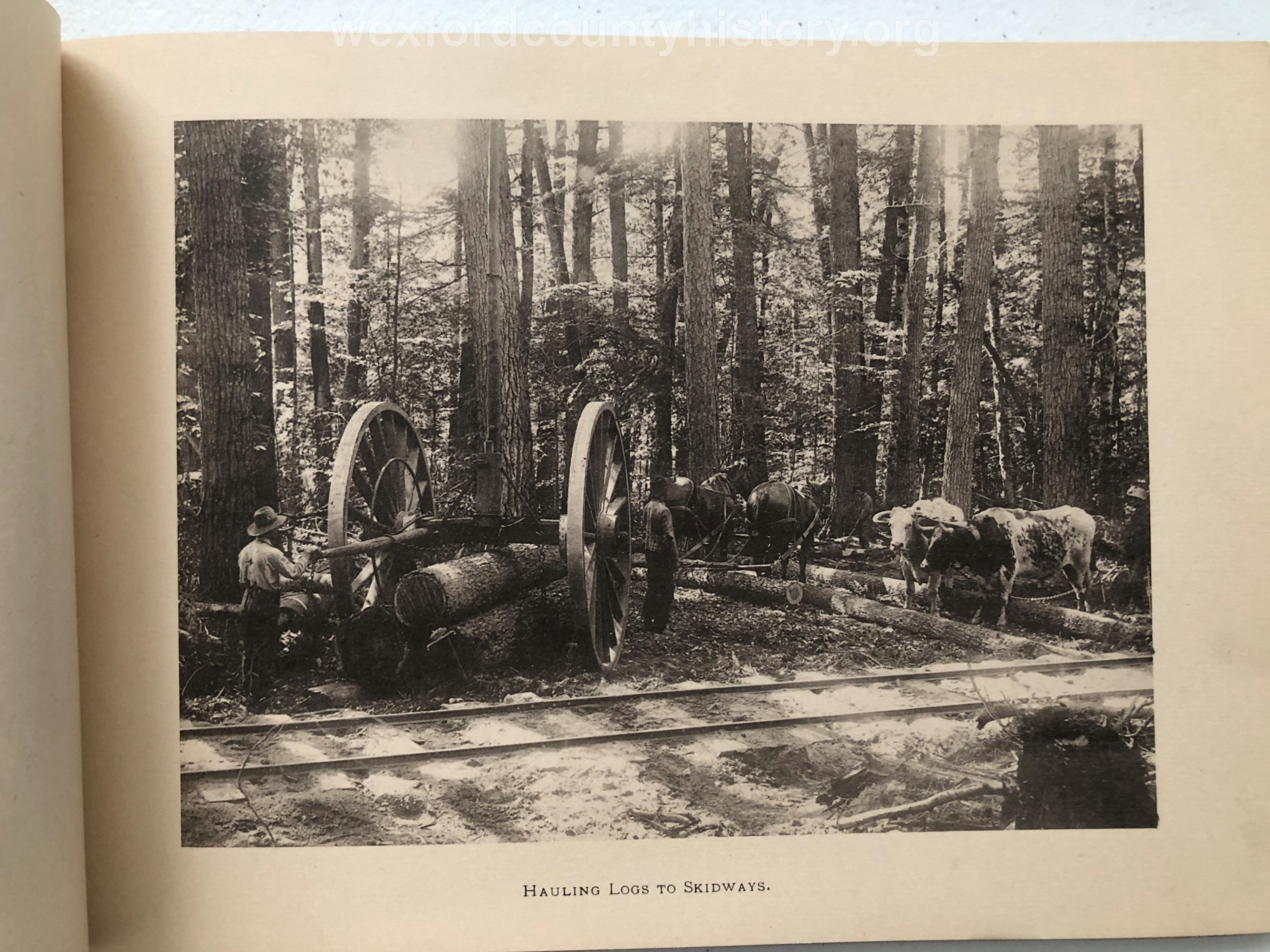 Cadillac-Lumber-Cummer-Workers-Hauling-Logs-To-Skidways-circa-1891