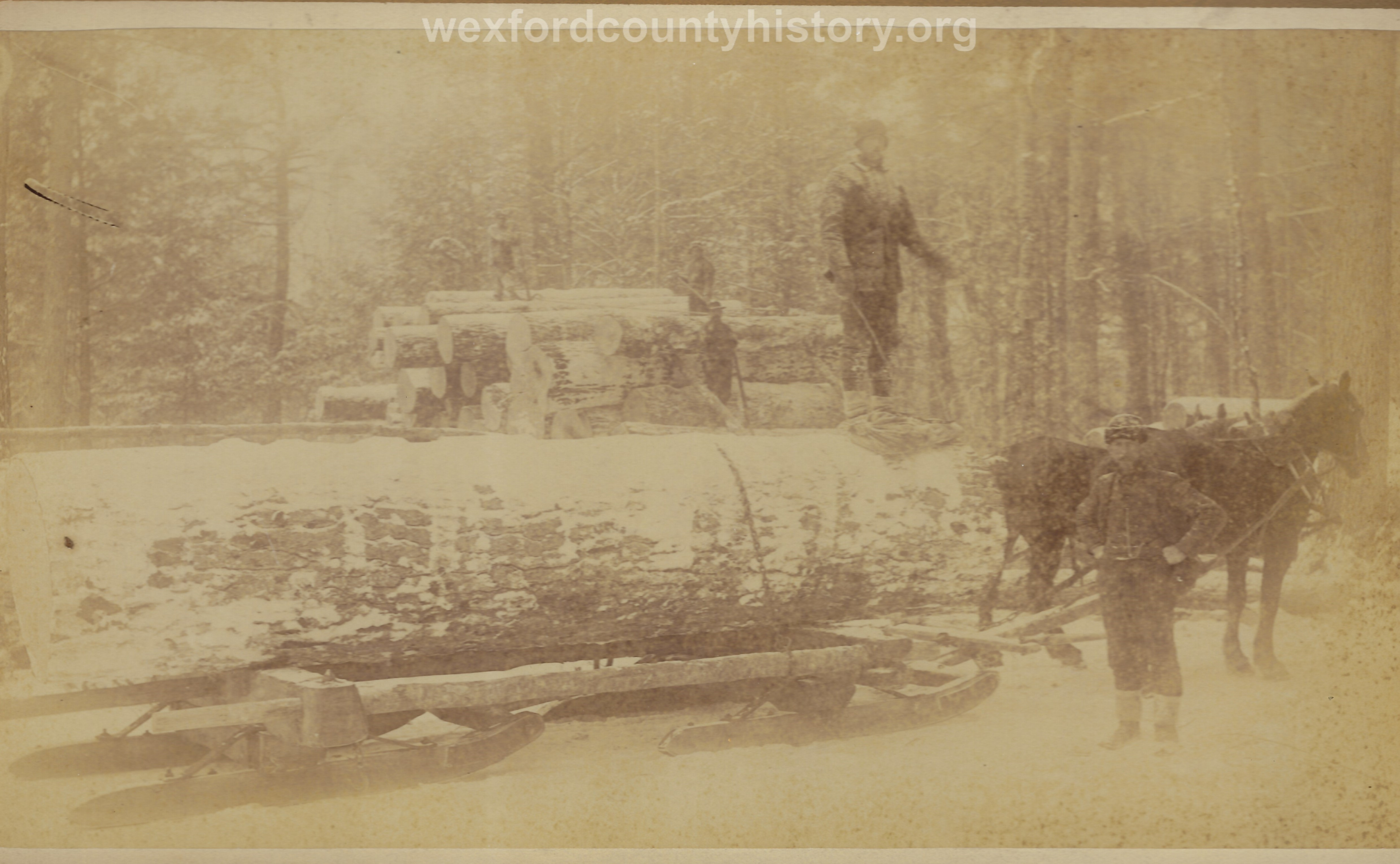 Cadillac-Lumber-Horse-Team-Pulling-Load-Of-Logs-On-Sled-10