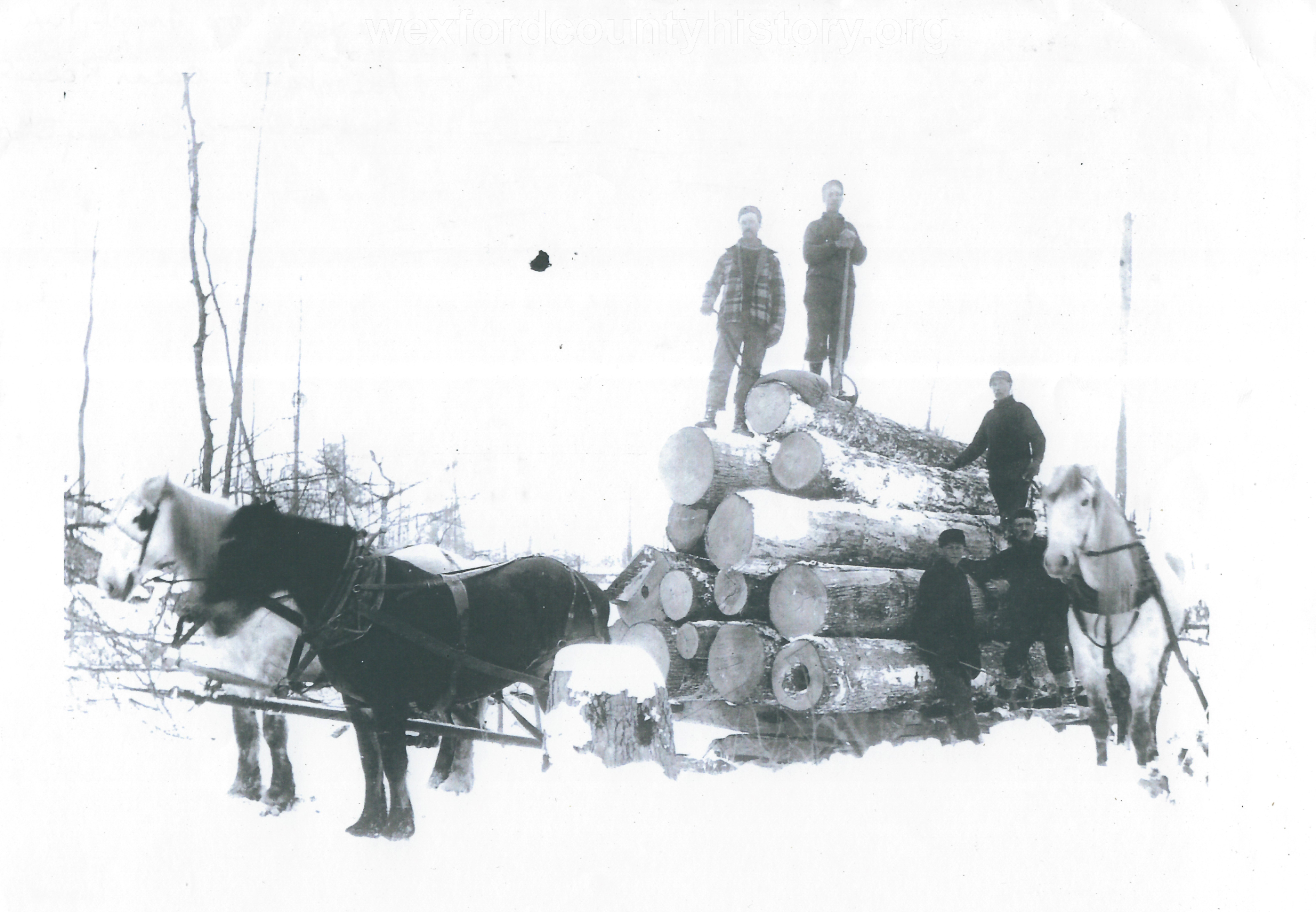 Cadillac-Lumber-Horse-Team-Pulling-Load-Of-Logs-On-Sled-11