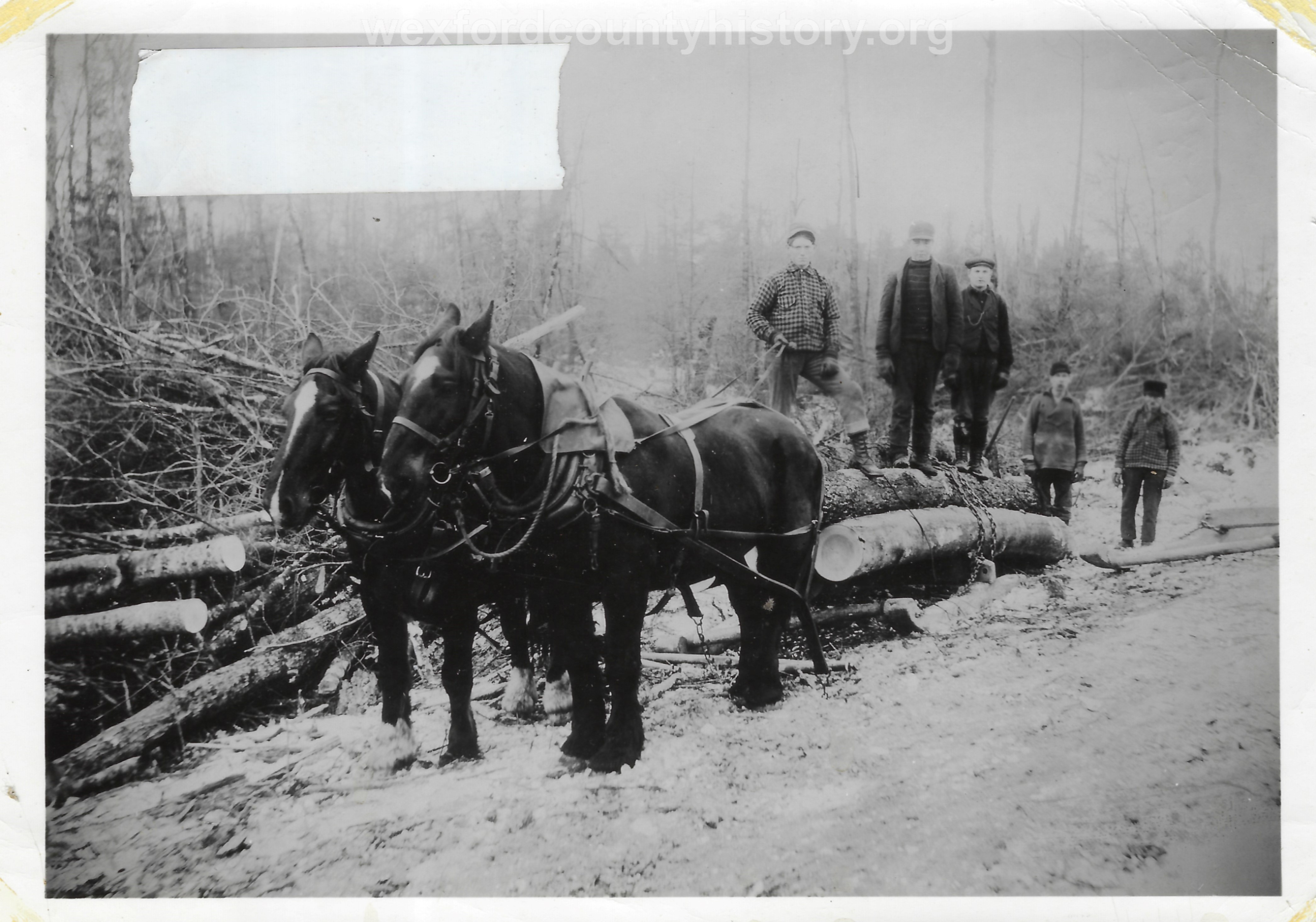 Cadillac-Lumber-Horse-Team-Pulling-Load-Of-Logs-On-Sled-3