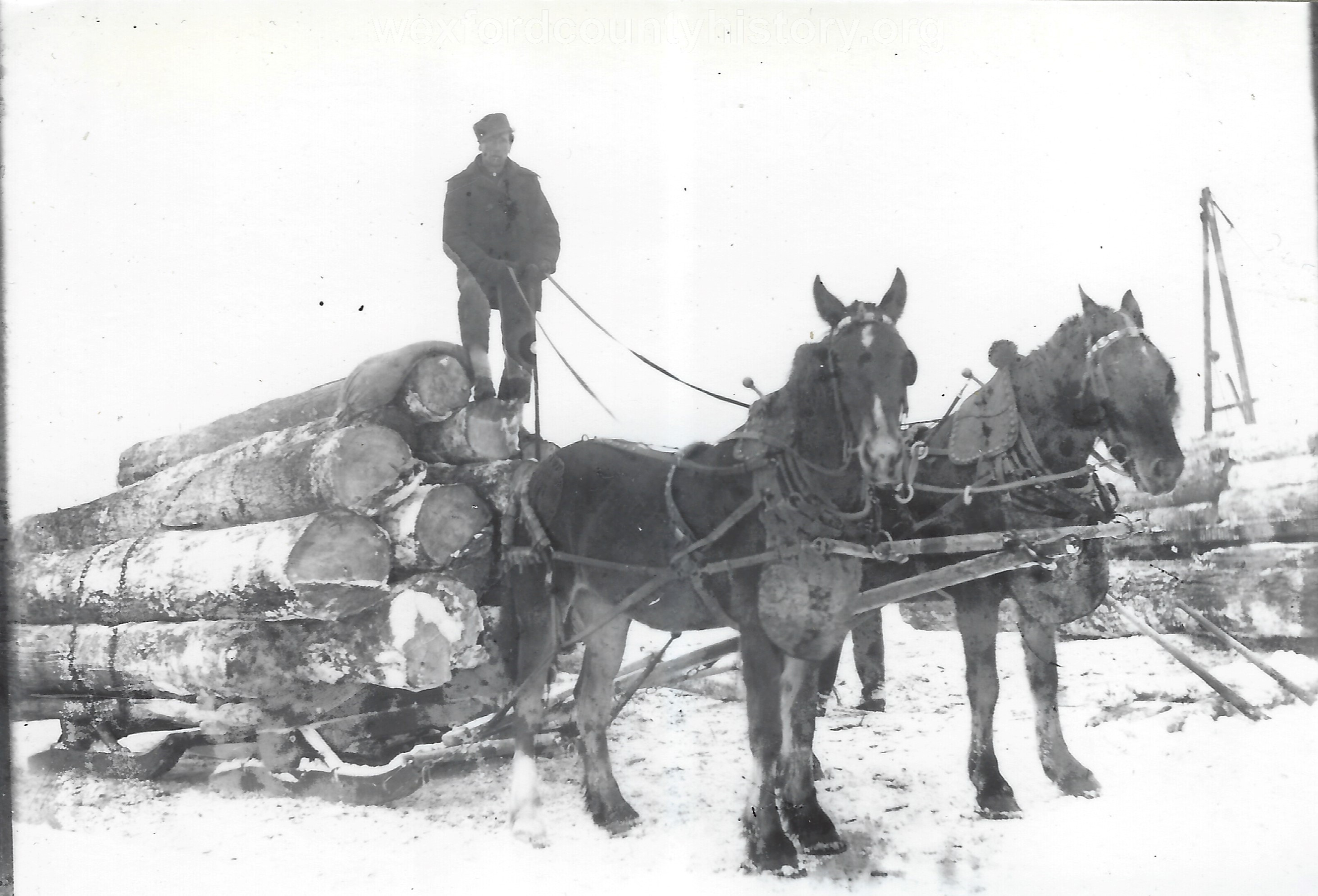 Cadillac-Lumber-Horse-Team-Pulling-Load-Of-Logs-On-Sled-8