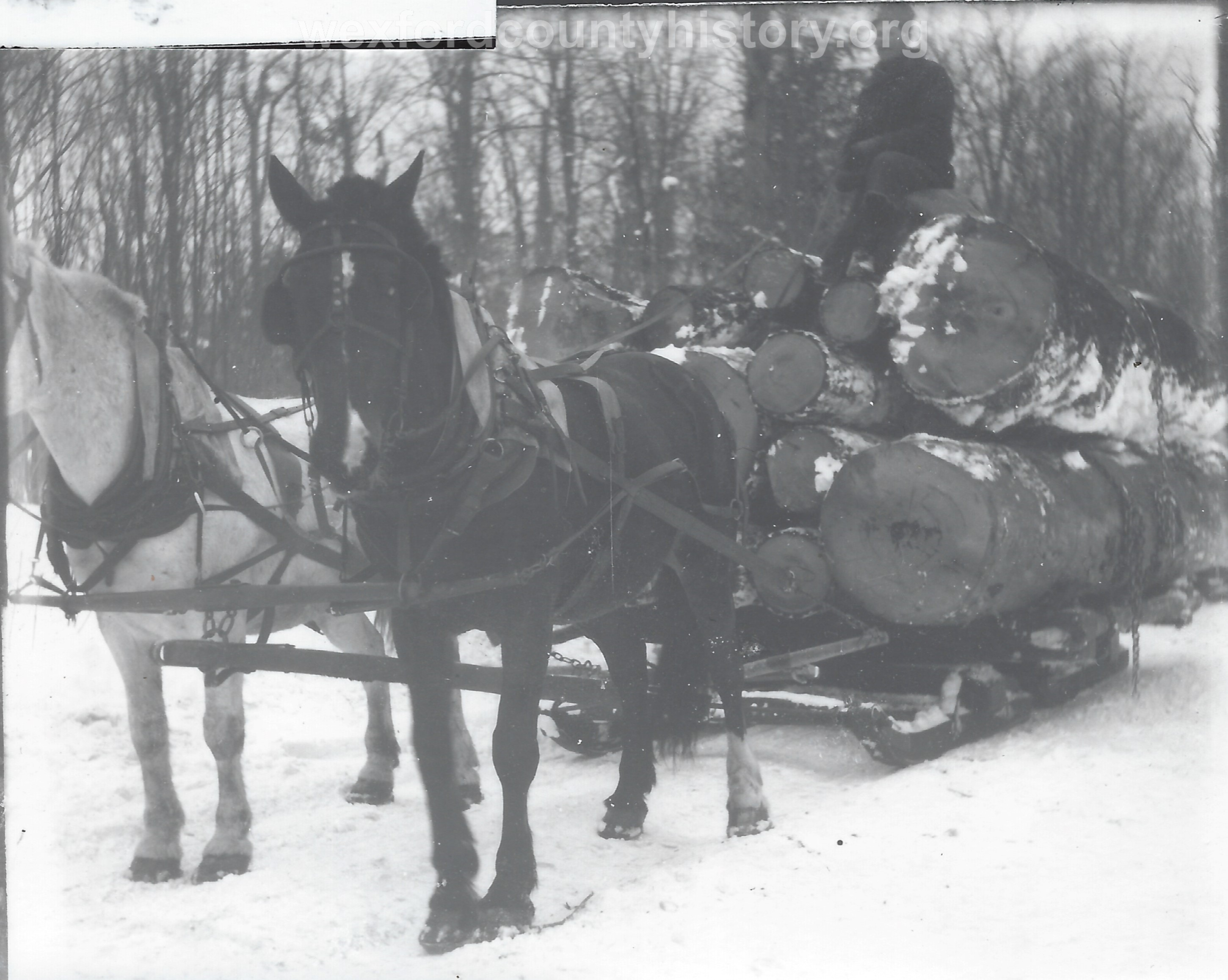 Cadillac-Lumber-Horse-Team-Pulling-Load-Of-Logs-On-Sled-9