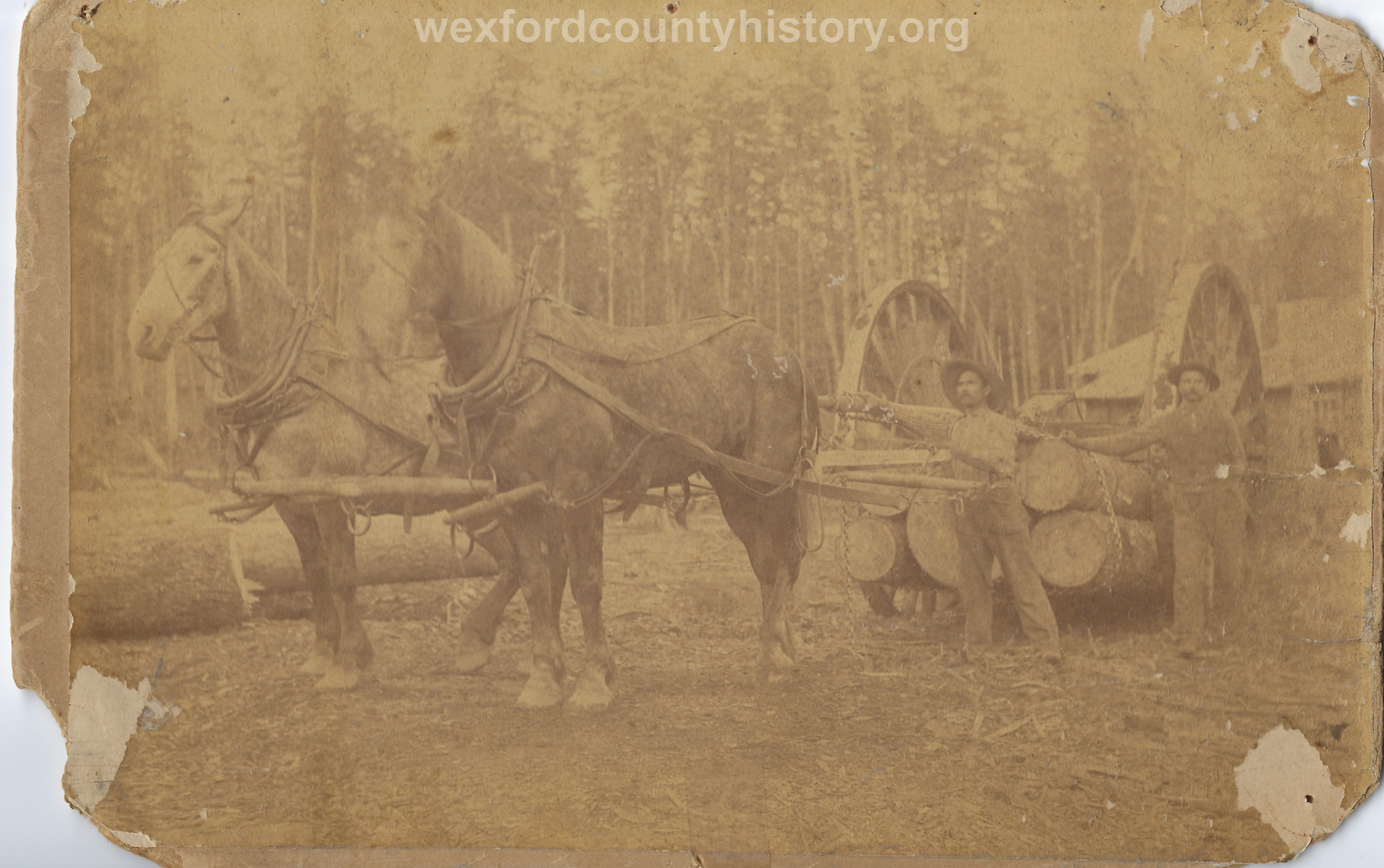 Cadillac-Lumber-Horse-Team-Pulling-Logs-2