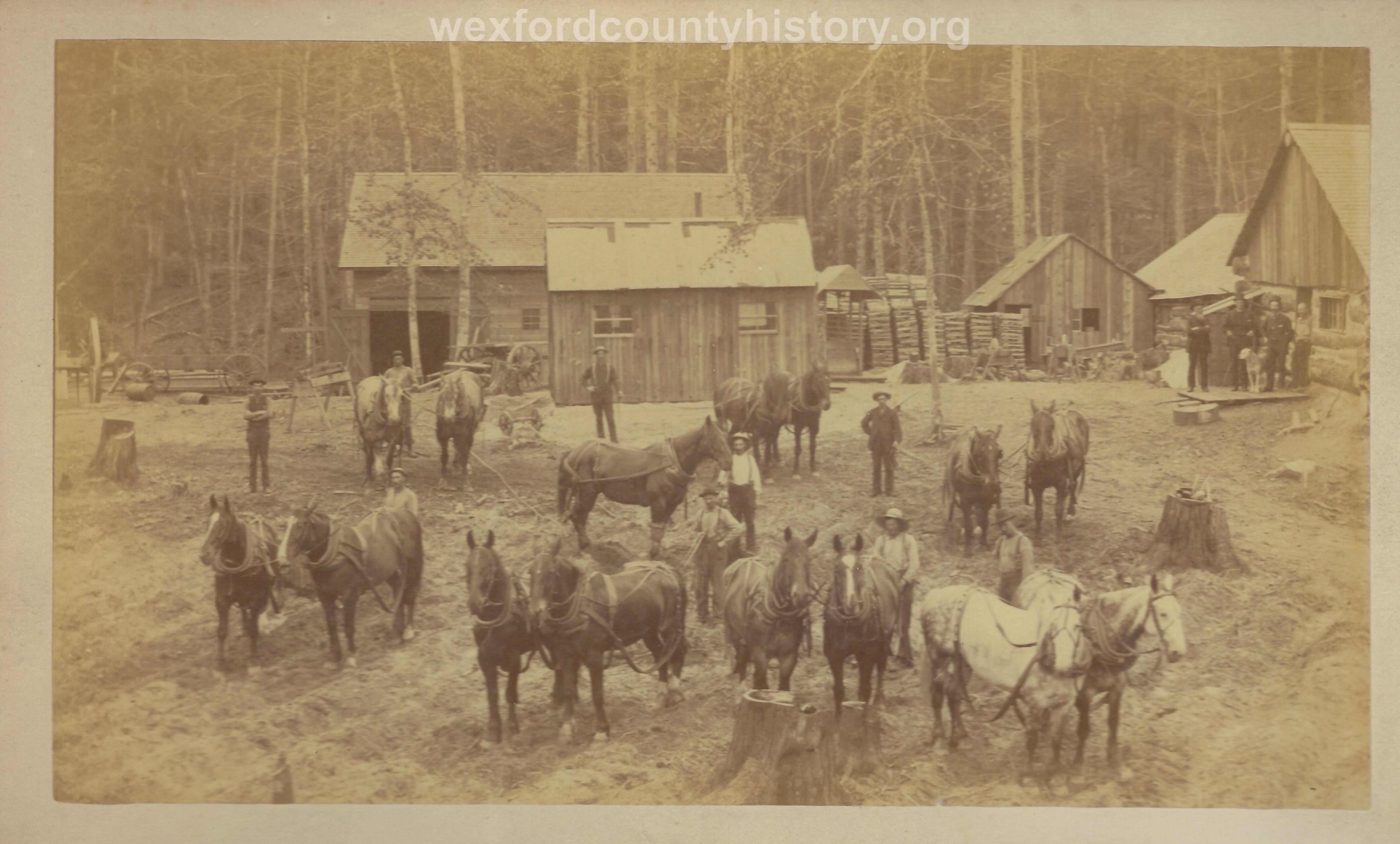 Cadillac-Lumber-Horse-Teams-In-Camp