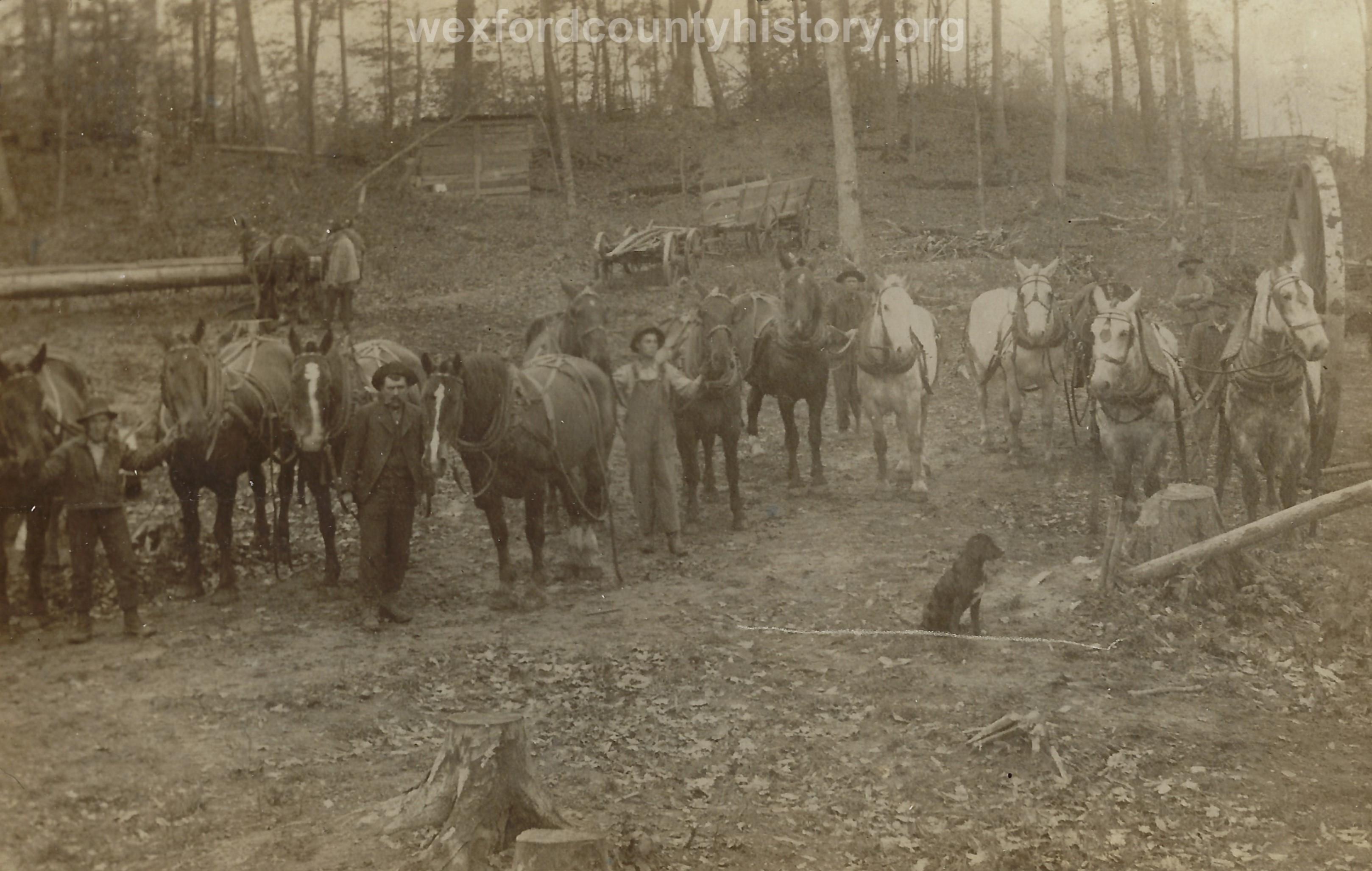 Cadillac-Lumber-Horse-Teams