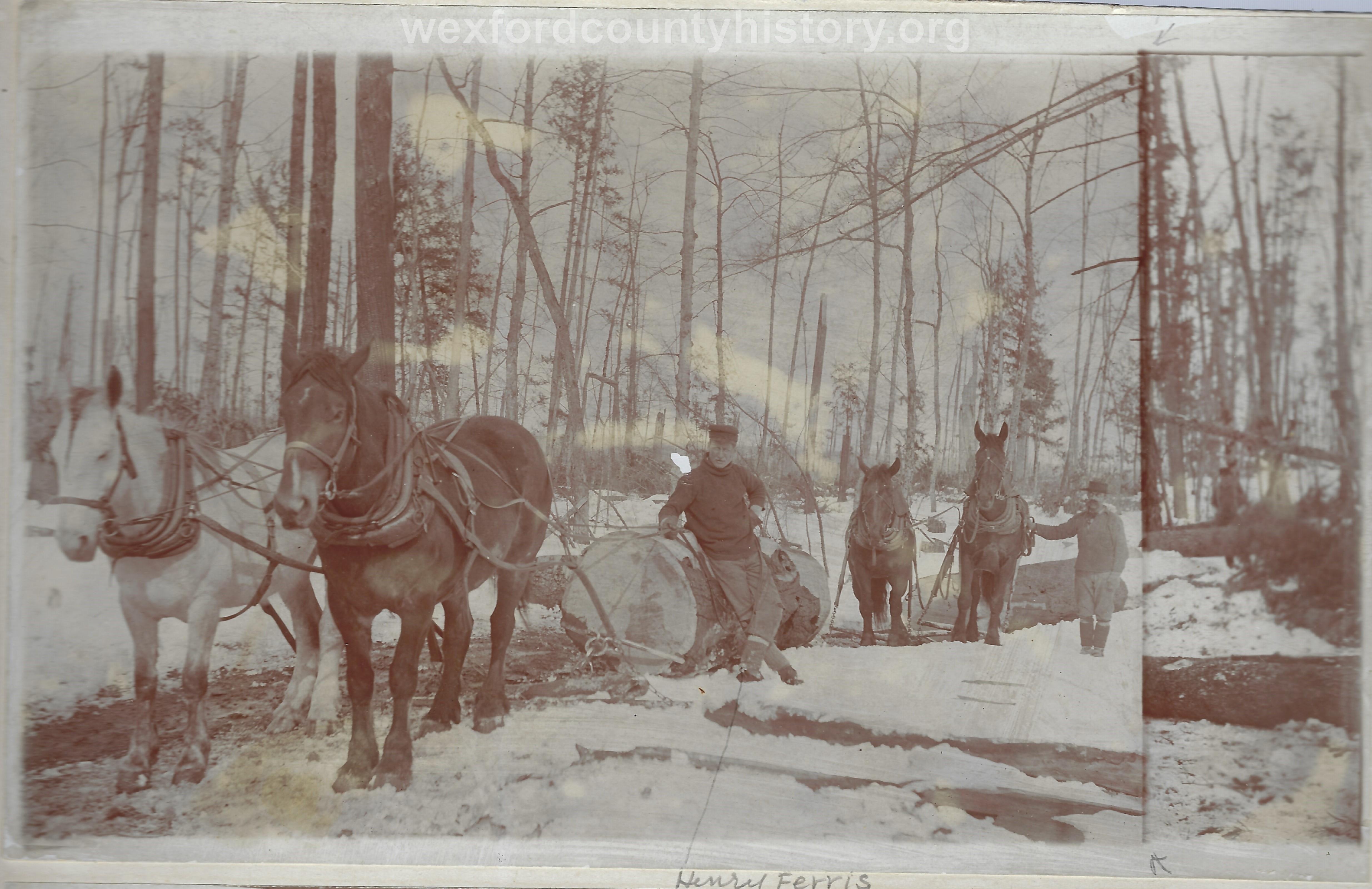 Cadillac-Lumber-Horses-Pulling-Logs