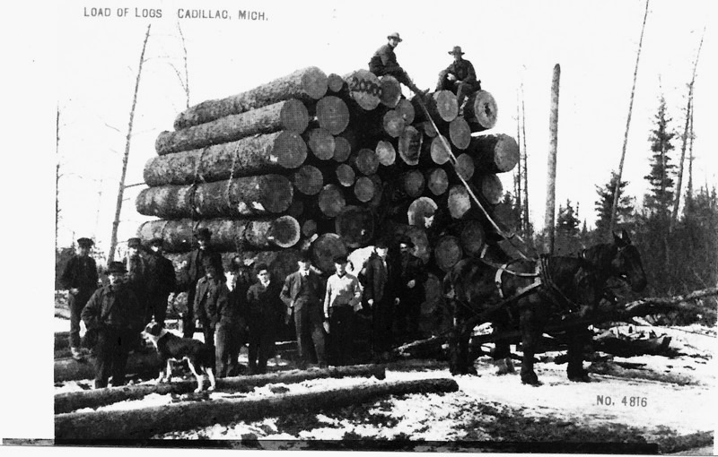 Logs Loaded for Transport to the Mill
