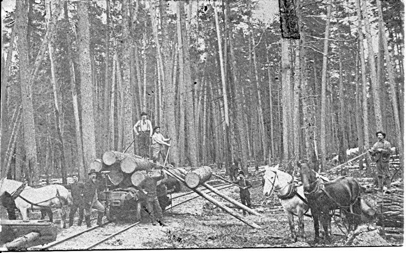 Loading Logs on Rail Cars