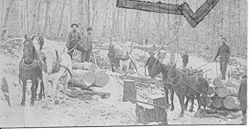 Horses Pulling Logs from Cutting Area