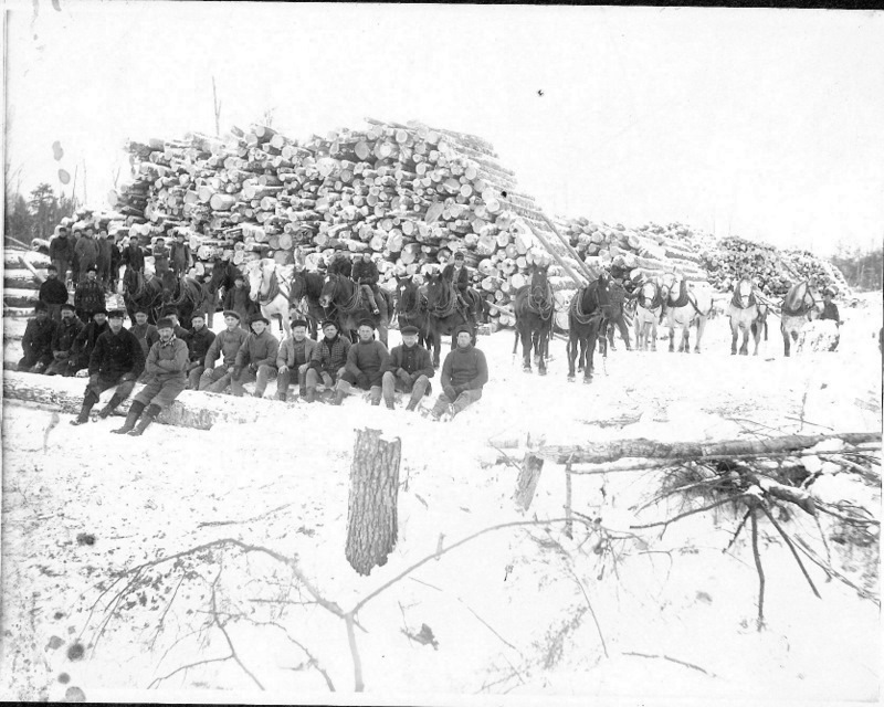 Harvested Logs
