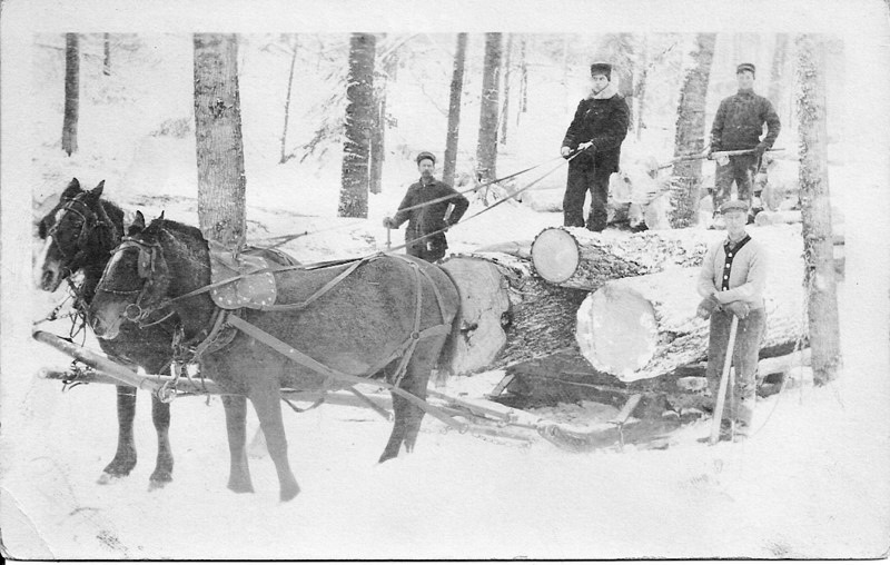 Large Logs Pulled by a Team