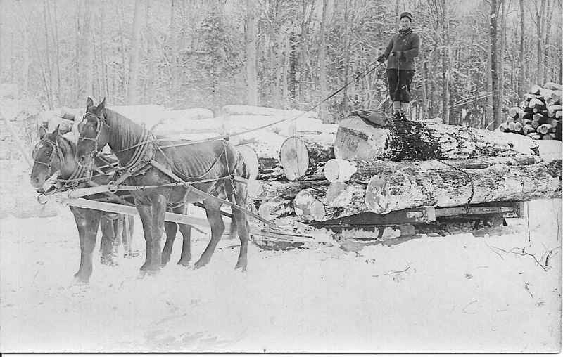 Horses Deliver Logs to the Rails
