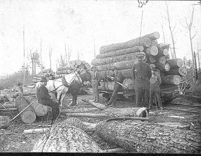 Logs Await Transport