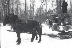 Cadillac-Lumber-Horse-Team-Pulling-Load-Of-Logs-On-Sled-1