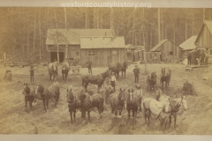 Cadillac-Lumber-Horse-Teams-In-Camp