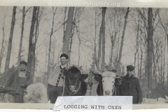 Cadillac-Lumber-Logging-With-Oxen