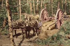 Cadillac-Lumber-Lumbering-Scene-Cadillac-Michigan