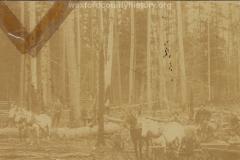 Cadillac-Lumber-Misc-Lumber-Scene-1-6