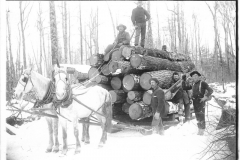 Logs Being Transported to the Rail Siding