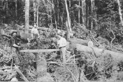 Preparing Logs for Removal