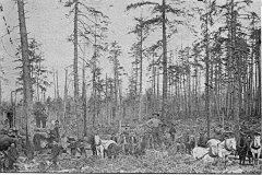Horses and Men at the Timber Cutting Area