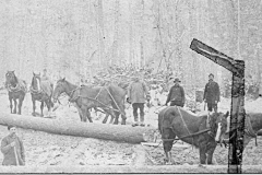 Horses and Men at Cutting Site