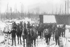 Horses Await their Assignments