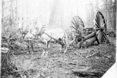 Logs Moved by Big Wheels