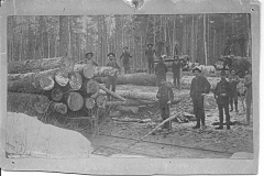 Logs Stacked by Tracks Await Transport to a Mill