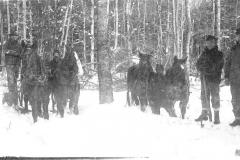 Horses Work in Deep Snow