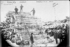 Collins Logging Camp