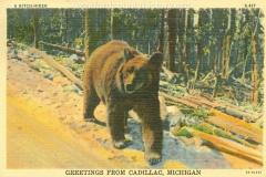 Cadillac-Random-Cadillac-Postcard-3