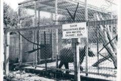 Sam The Bear