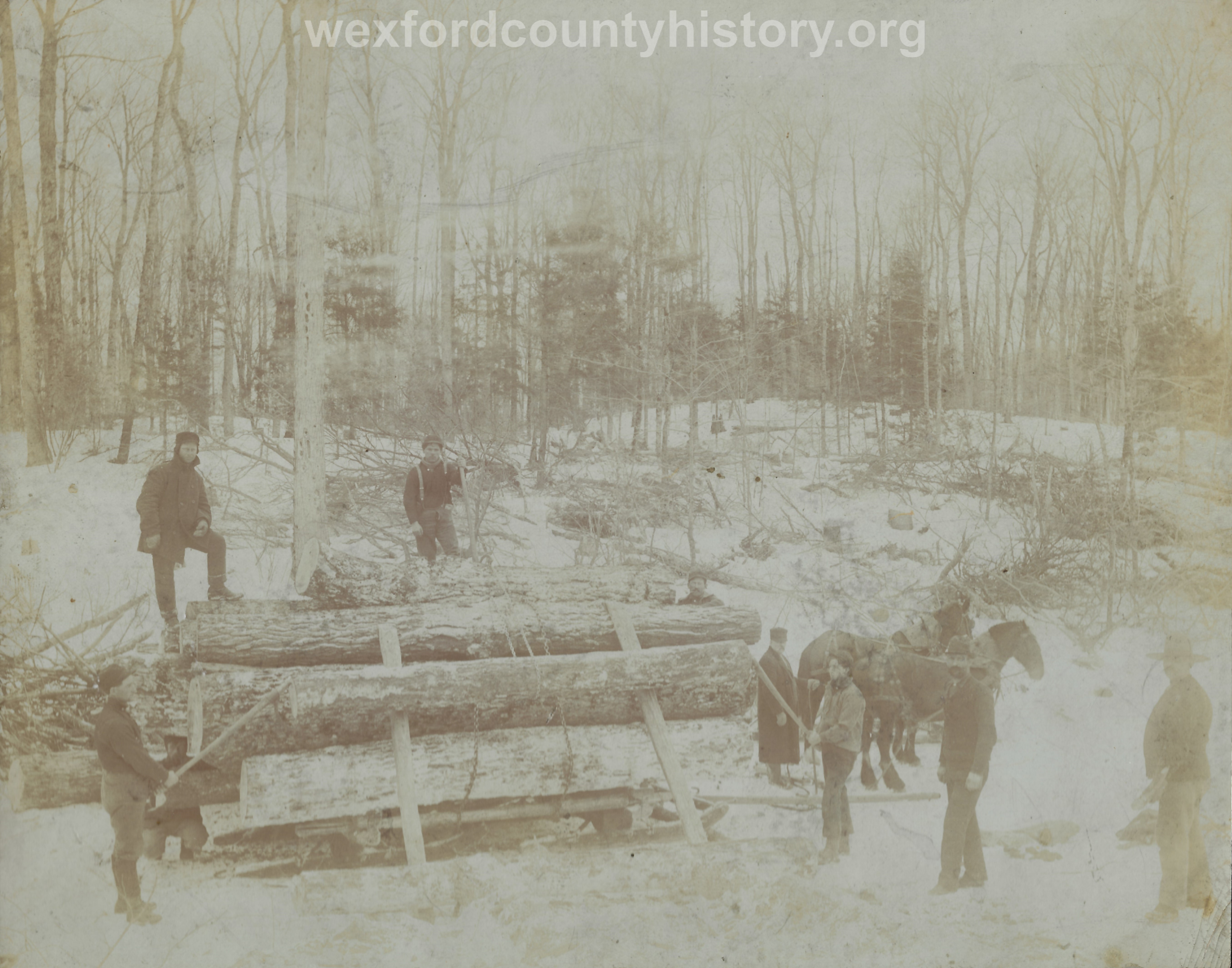Cadillac-Lumber-Horse-Team-Pulling-Load-Of-Logs-On-Sled-2