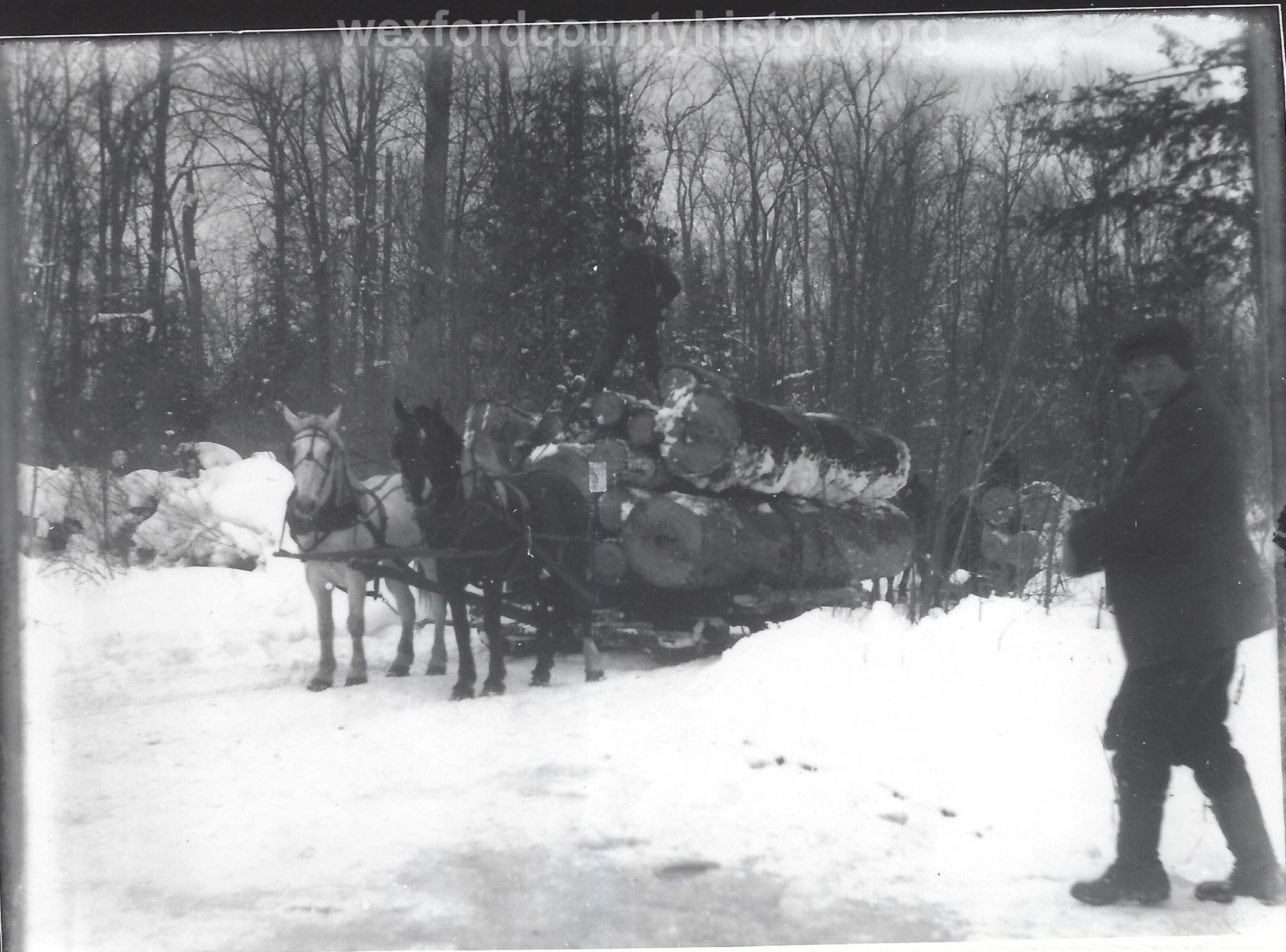 Cadillac-Lumber-Horse-Team-Pulling-Load-Of-Logs-On-Sled-4
