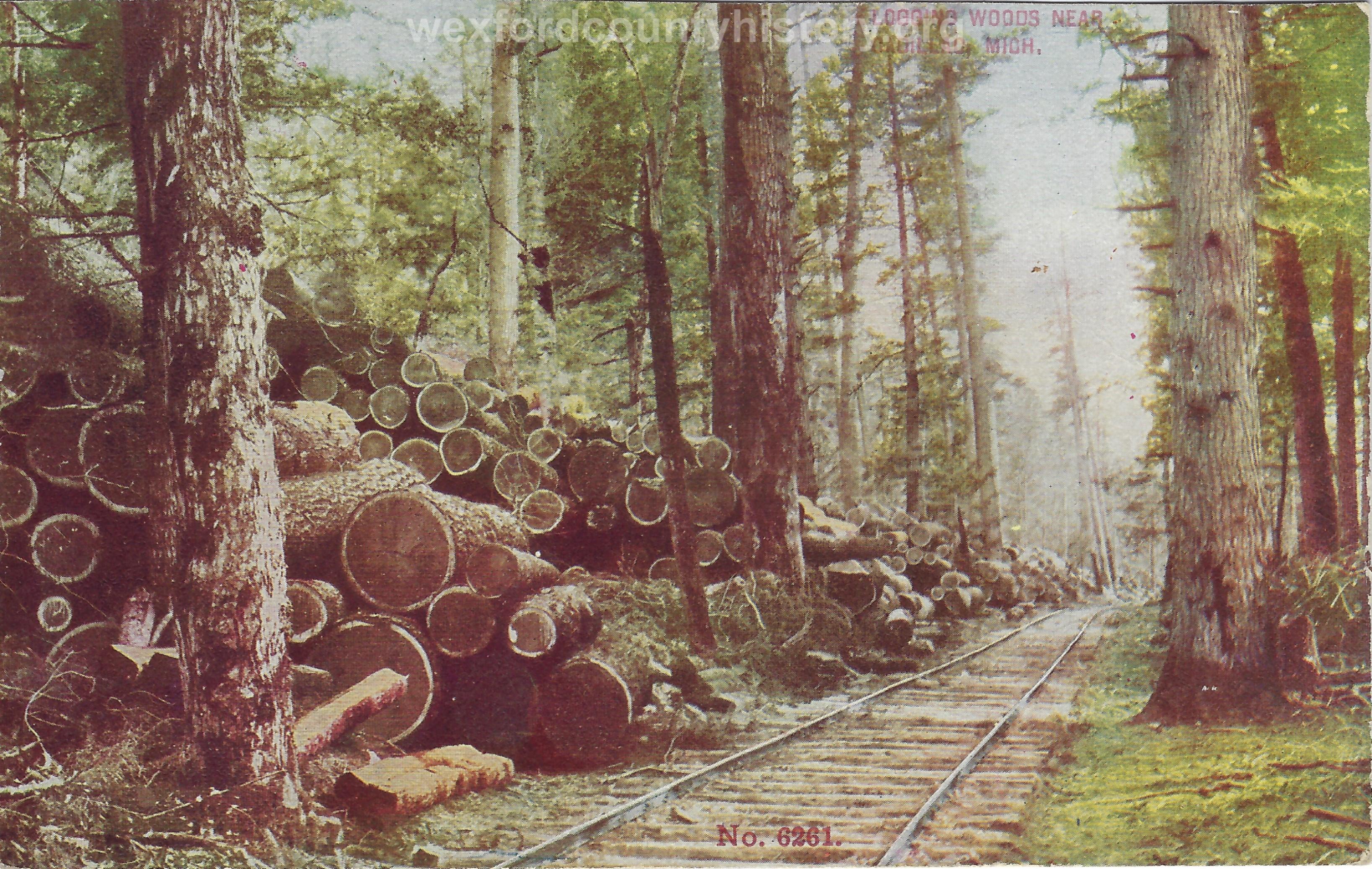 Cadillac-Lumber-Logging-Woods-Near-Cadillac-Michigan