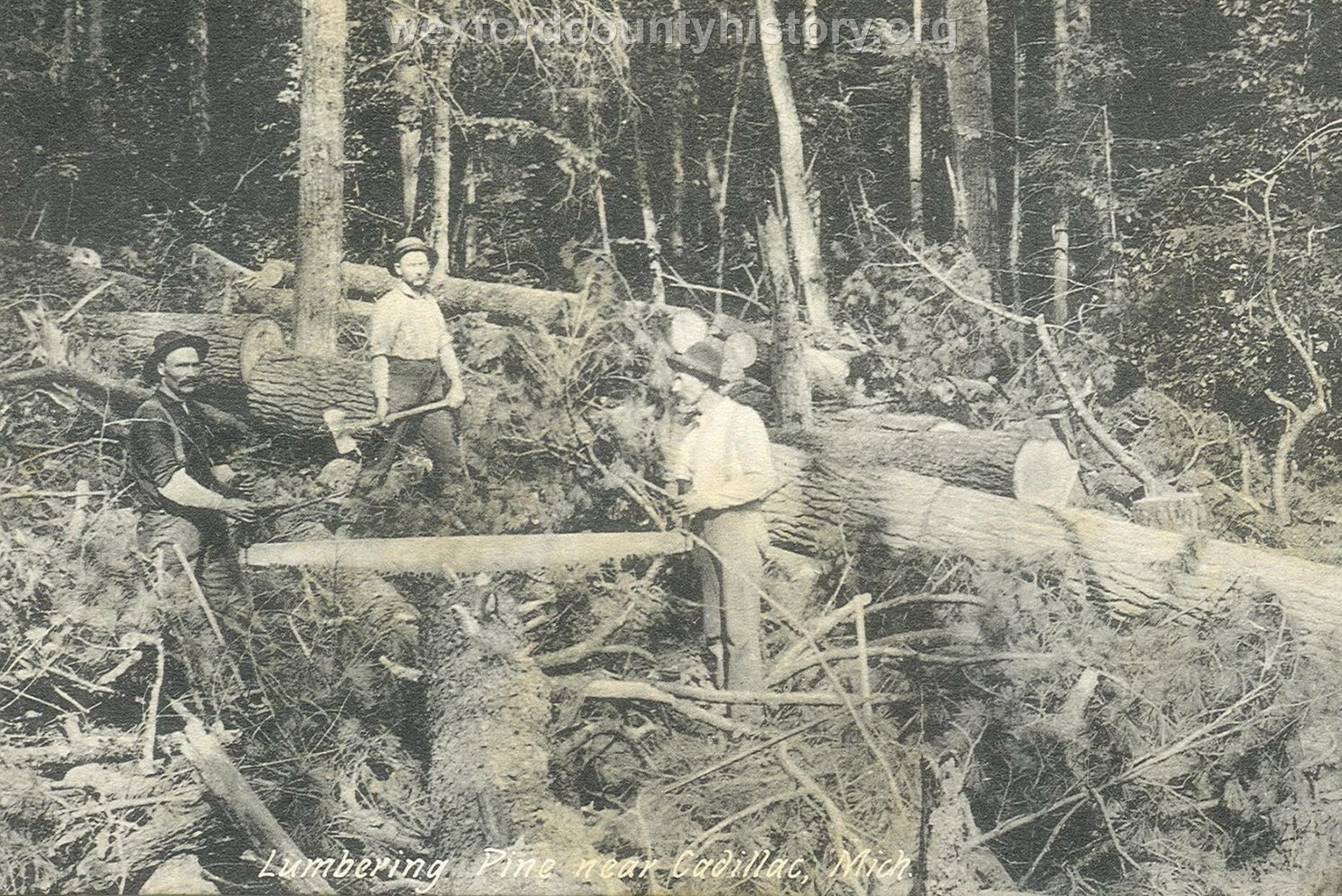 Cadillac-Lumber-Lumbering-Pine-Near-Cadillac-Michigan
