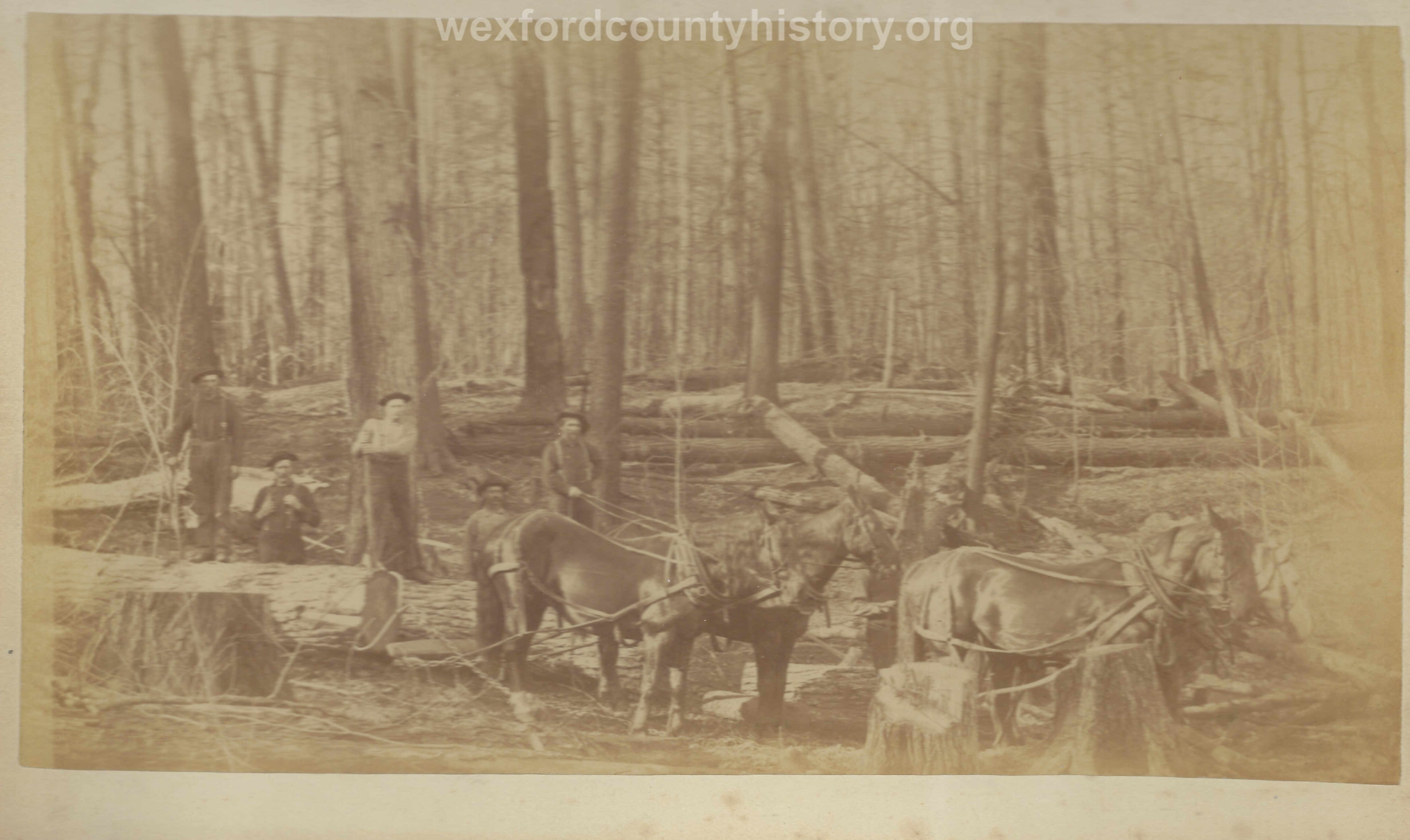 Cadillac-Lumber-Misc-Lumber-Scene-1-34