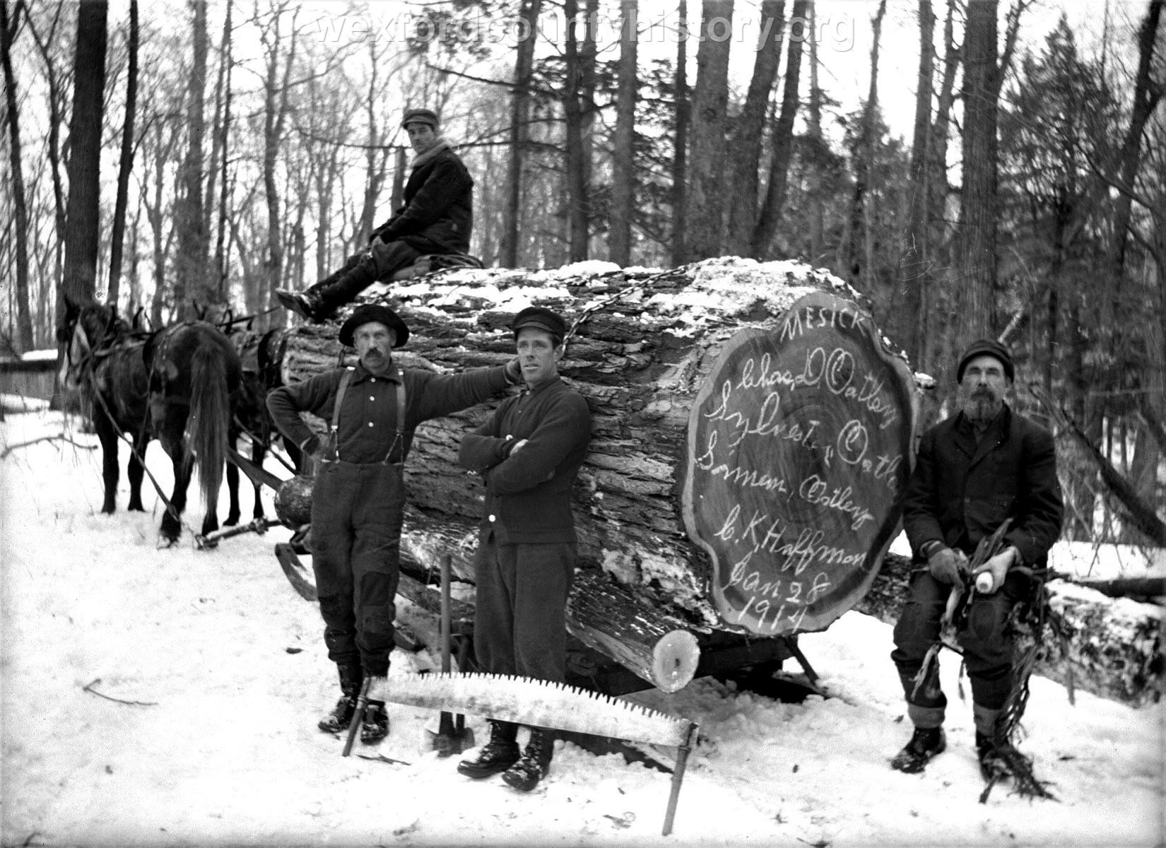 Mesick-Lumber-Huge-Log