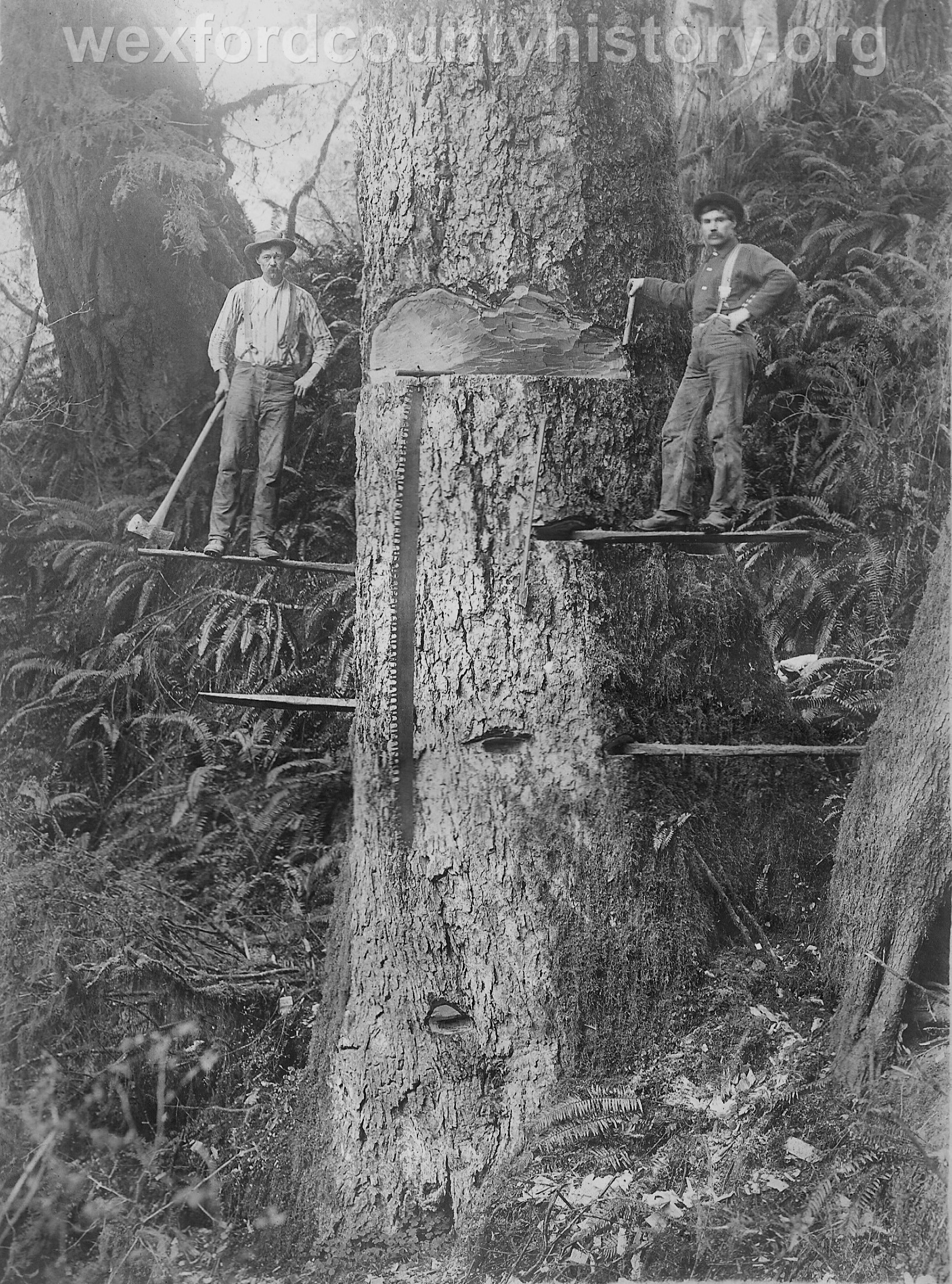 Wexford-County-Lumber-Timber-Harvest-Circa-1890s-10