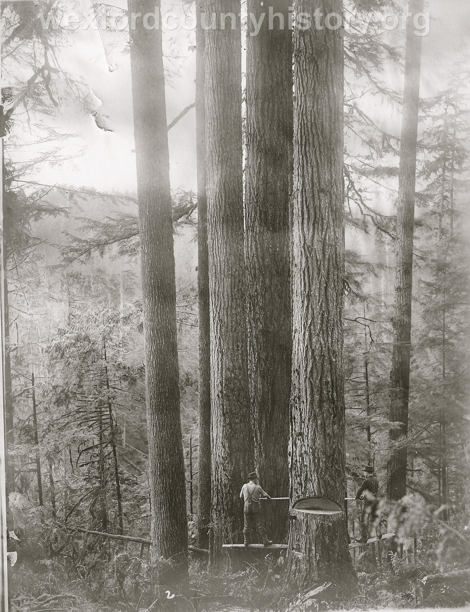 Wexford-County-Lumber-Timber-Harvest-Circa-1890s-2