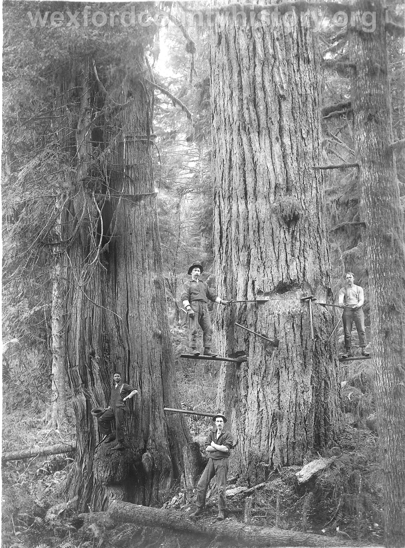 Wexford-County-Lumber-Timber-Harvest-Circa-1890s-3