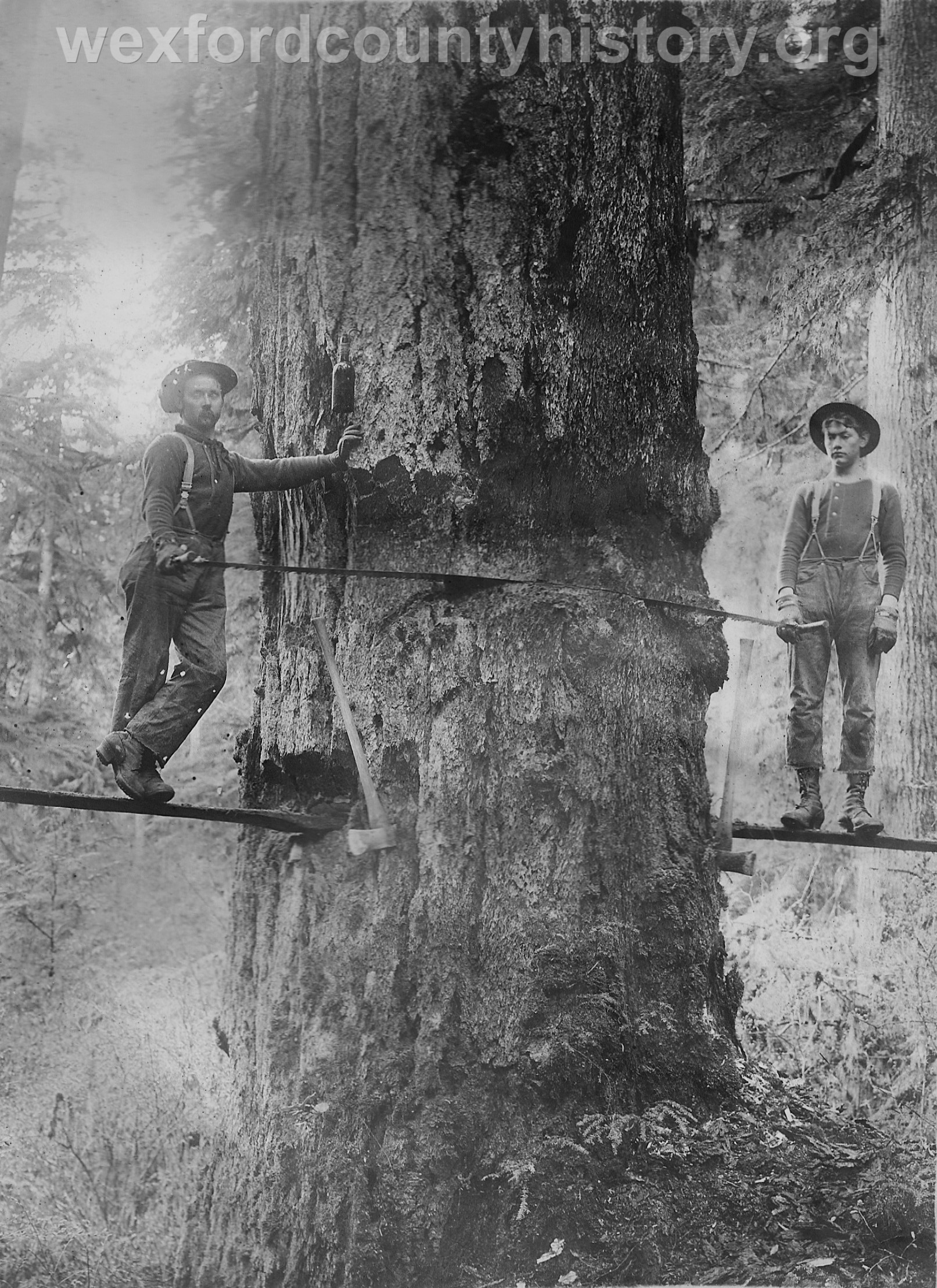Wexford-County-Lumber-Timber-Harvest-Circa-1890s-4