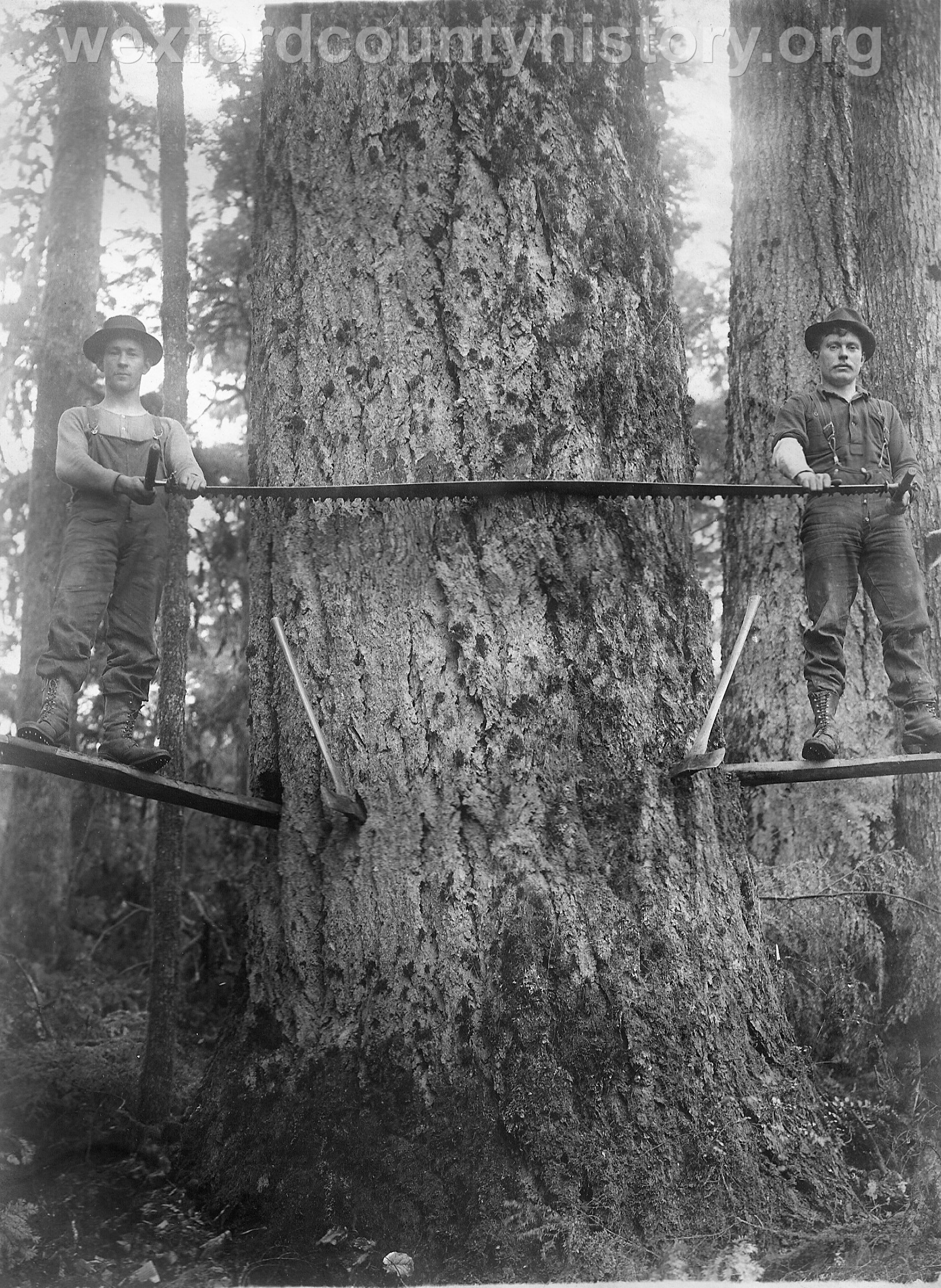 Wexford-County-Lumber-Timber-Harvest-Circa-1890s-7