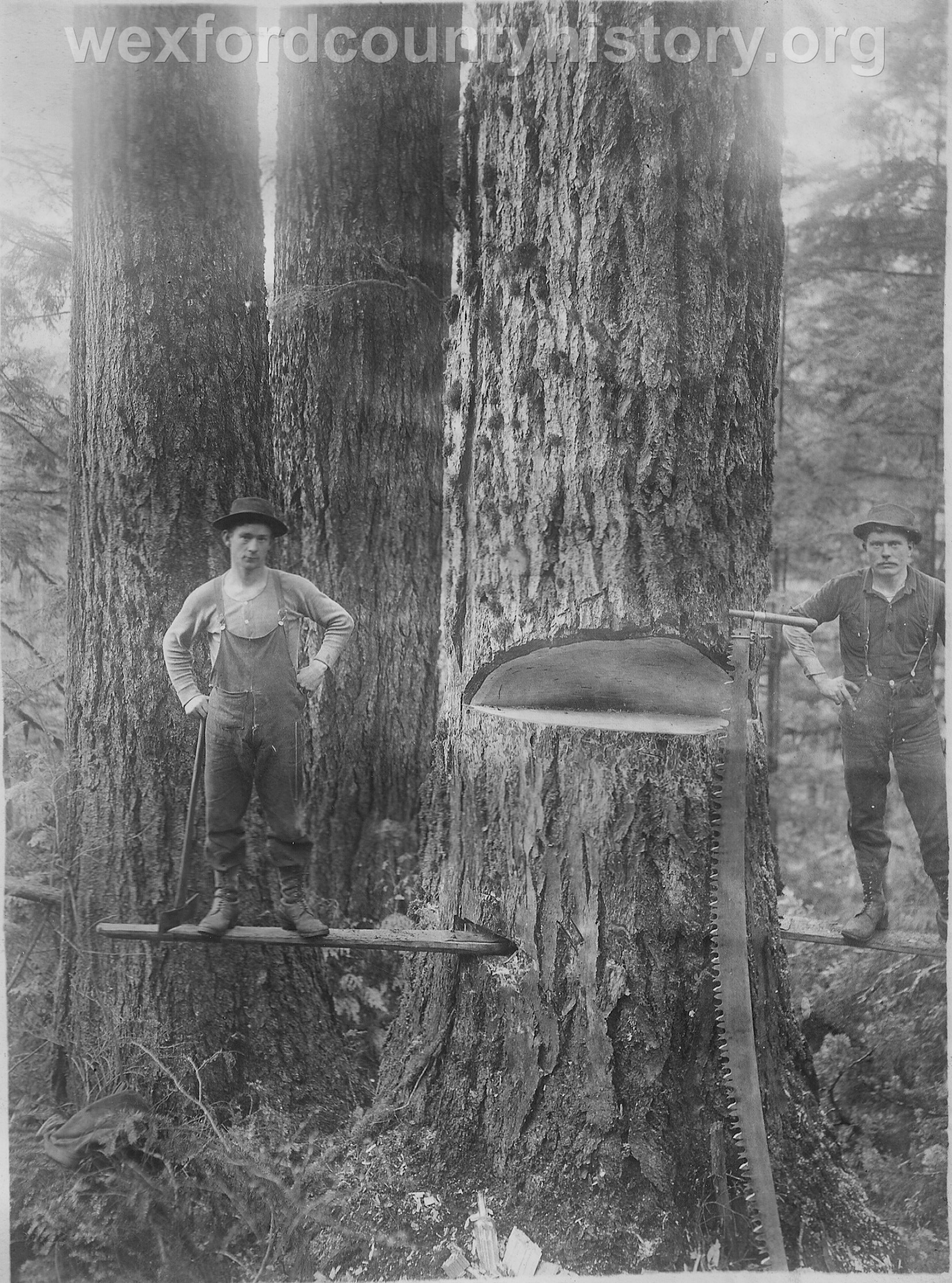 Wexford-County-Lumber-Timber-Harvest-Circa-1890s-8